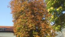 Herbst im Hof